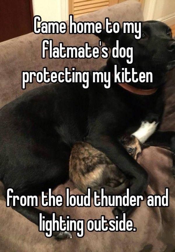 13 Haustiere, die noch entzückender sind, wenn sie Angst vor Donner und Blitz haben - #Angst #Blitz #die #Donner #entzückender #haben #Haustiere #noch #pics #Sie #sind #und #vor #wenn