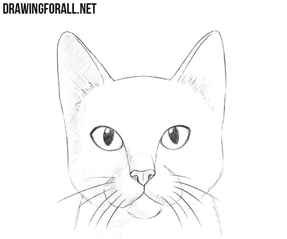 How To Draw A Cat Head Cat Face Drawing Simple Cat Drawing Cartoon Cat Drawing