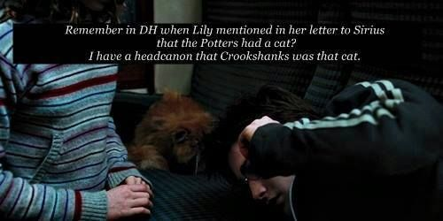 Great headcannon! WAIT--- That cat was in the house on the night of the attack... And Voldemort's soul attatched to Harry's because he was the only other living thing in the house... Or so we thought! So that cat's another horcrux!!!