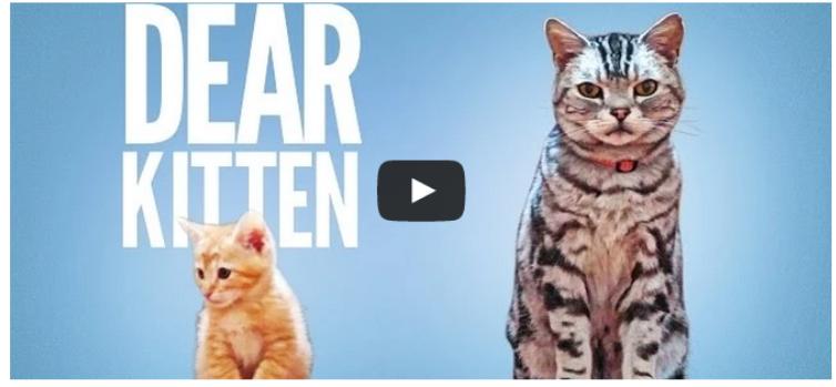 バイラルメディアのBuzzFeedが作成した動画広告は、猫の缶詰。とっても可愛い映像になっています。  (via http://attrip.jp/133316/ )