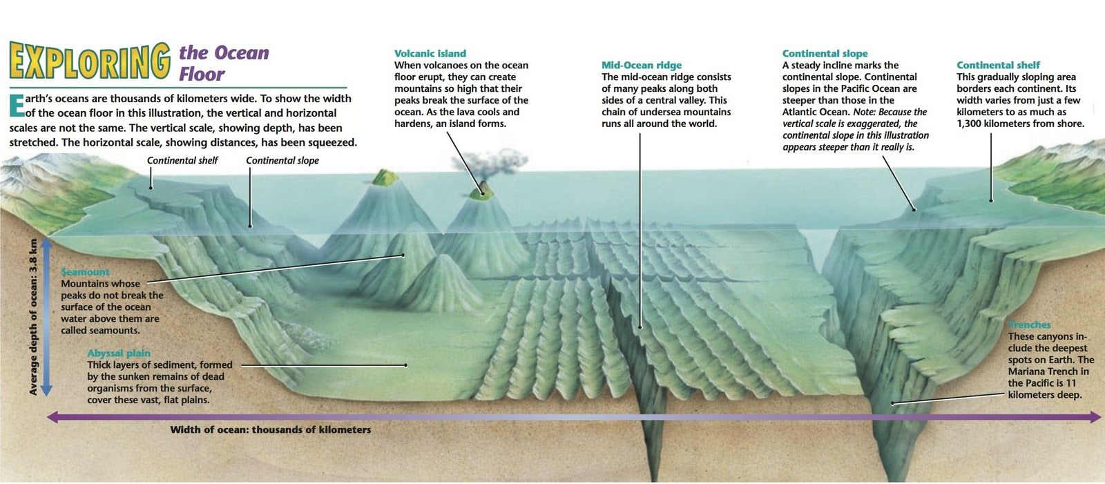 4 types of ocean floors. Types of ocean, Continental