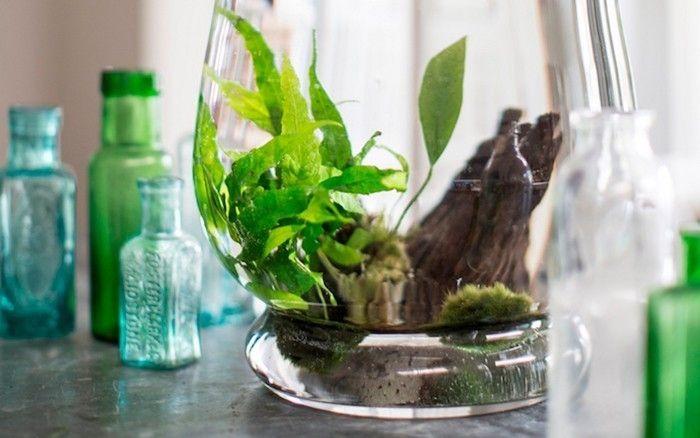 plante aquatique jetez vous l 39 eau en 47 photos pinterest plantes. Black Bedroom Furniture Sets. Home Design Ideas