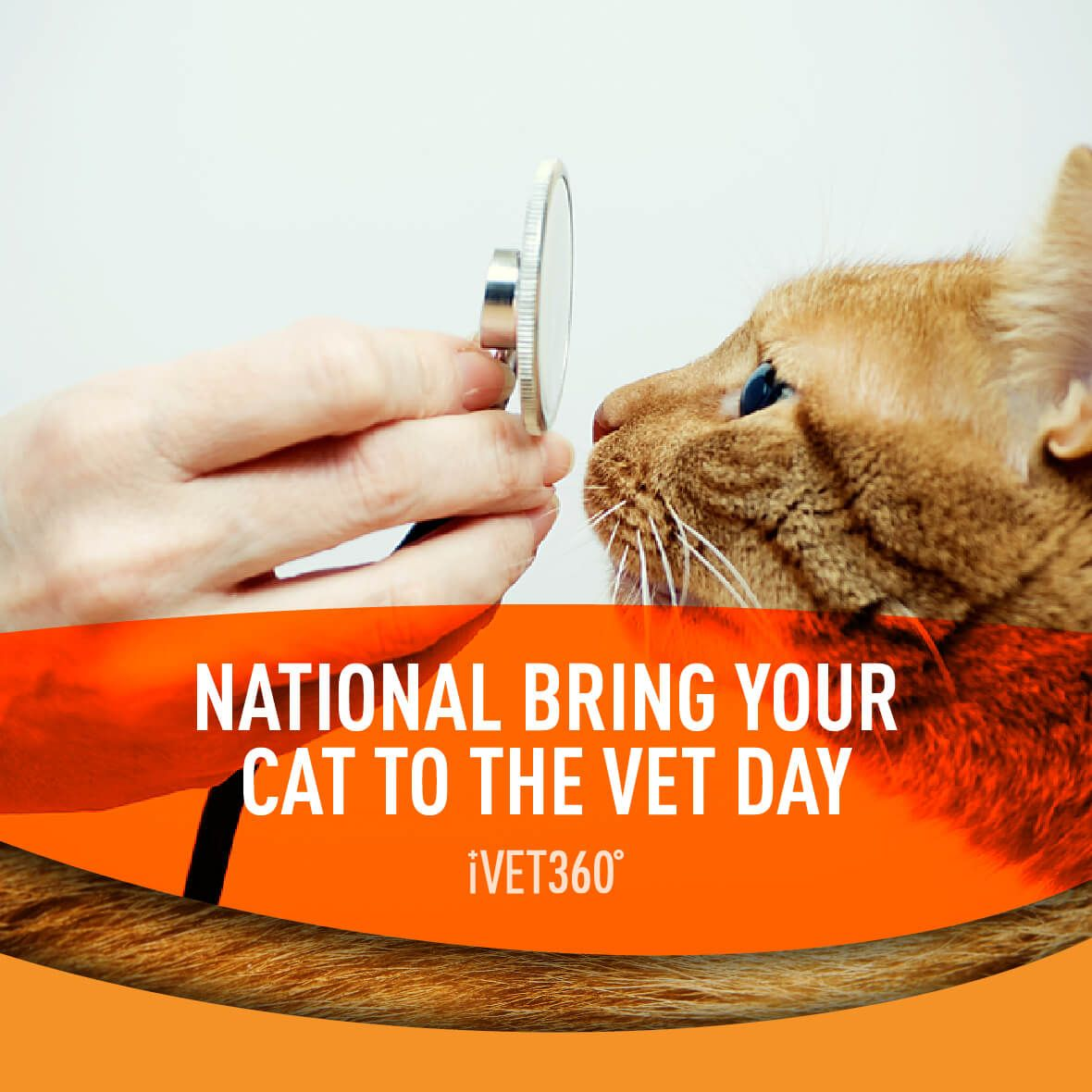 National Bring Your Cat To The Vet Day (With images) Pet