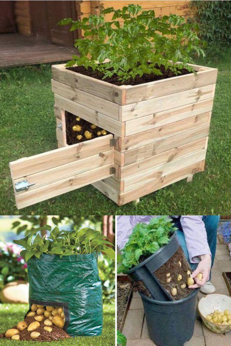 Epingle Par Karine B Sur Jardin Cultiver Des Pommes De Terre