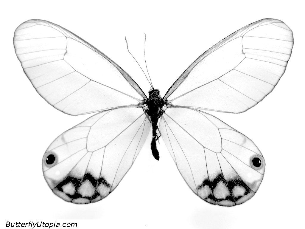 easy beautiful sketches to draw   ... Pages, Butterfly Crafts, Page ...