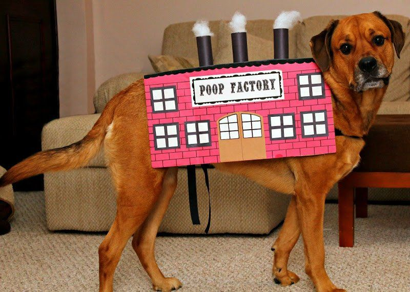 15 Of The Best Diy Halloween Dog Costumes Out There Dog