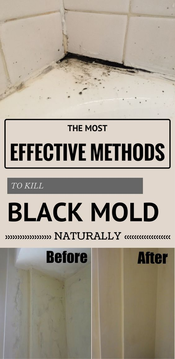 The Most Effective Methods To Kill Black Mold Naturally