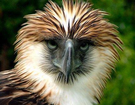 30 adorables espèces en voie de disparition