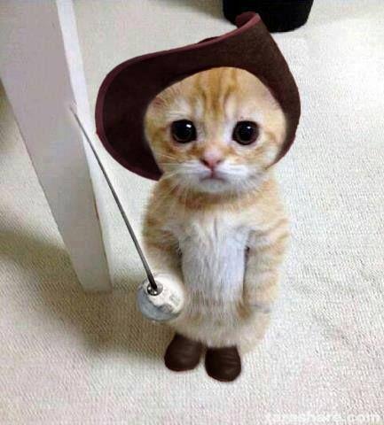 Puss in Boots #adorablekittens