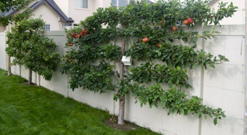 Spalierobst anbauen u2013 herrliche Idee für den kleinen Garten - ideen fur den kleinen garten