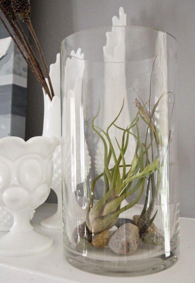 wurzellose pflanzen stein glasvase rund kamin deko wohnen
