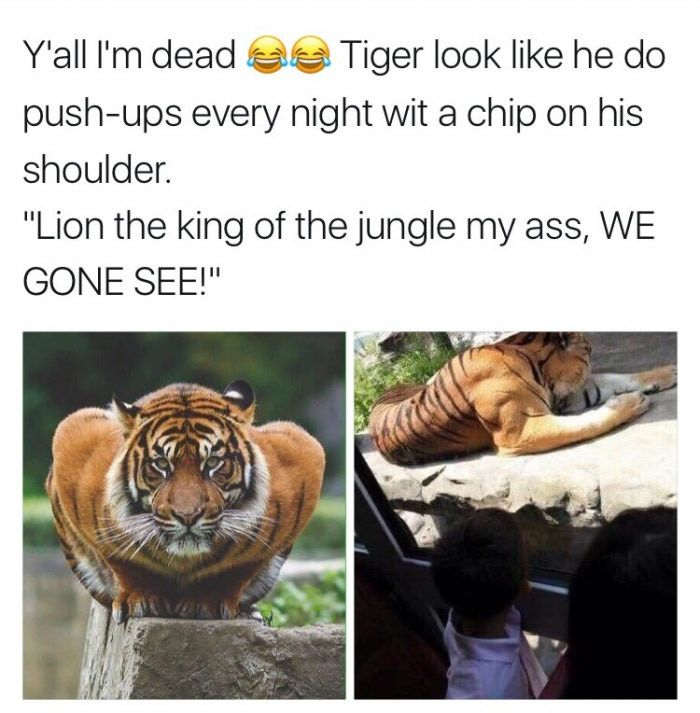 He been eating his damn Frosted Flakes - Funny