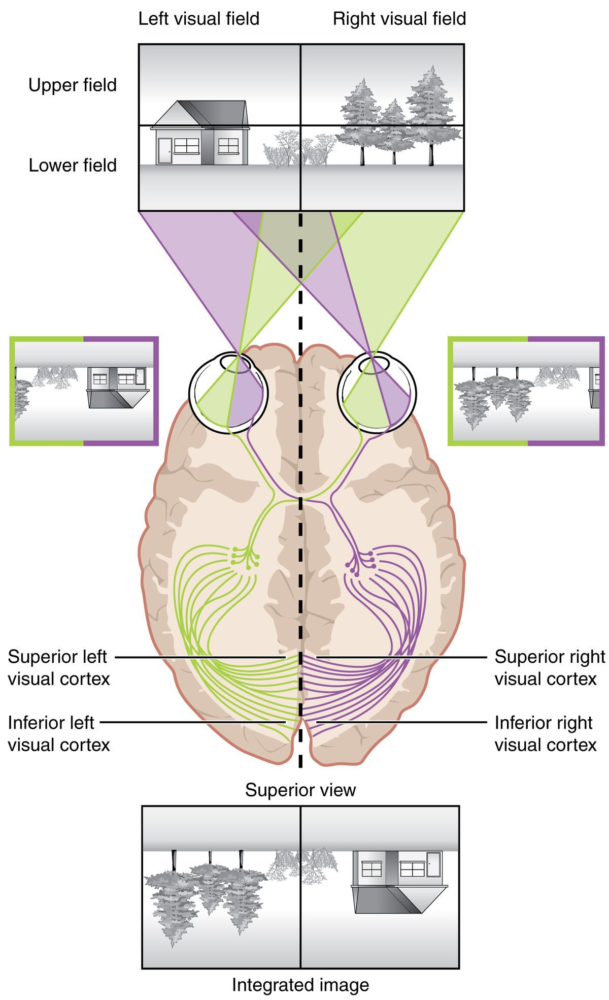 Human Vision And Functionpart 1 How The Eye Works14 Anatomy Of