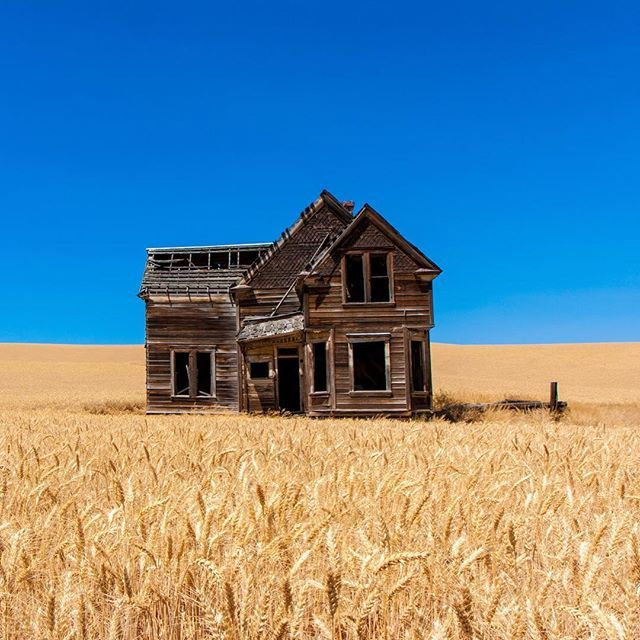 Abandoned Home Surrounded By Wheat Fields In Oregon