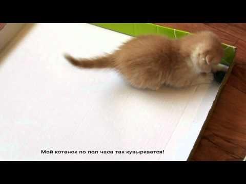 Ideas para Hacer mas feliz a tu Gato o Gatito - Taringa!