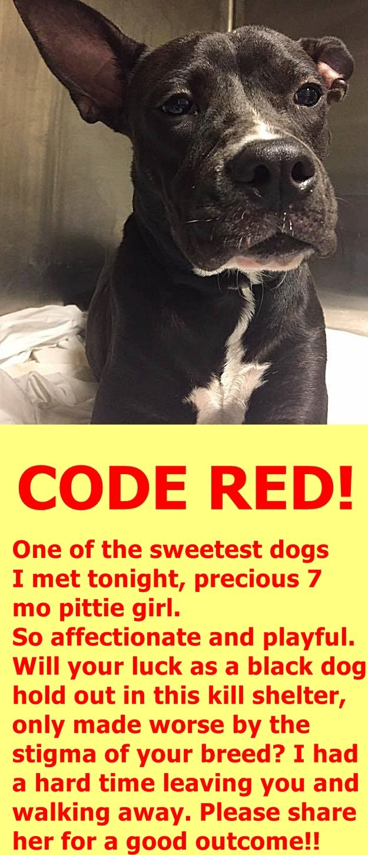 Awww Ava A1828108 Miami Dade Animal Services Pet
