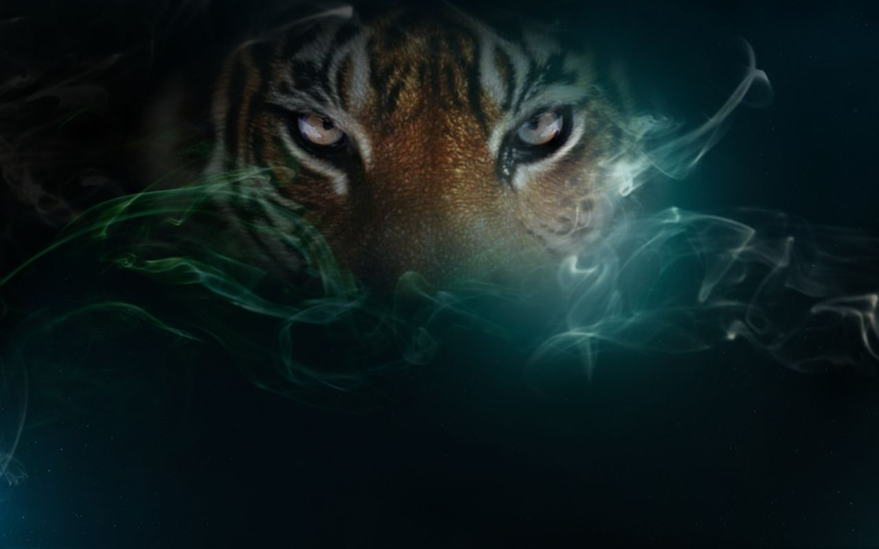 cute tiger wallpapers wallpaper | hd wallpapers | pinterest | hd