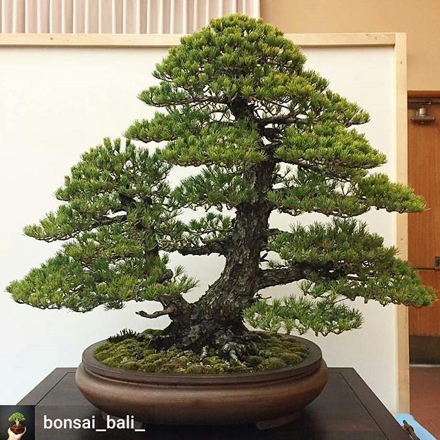 BONSAI CERAMIC TATTOO ART (With images) Bonsai trees