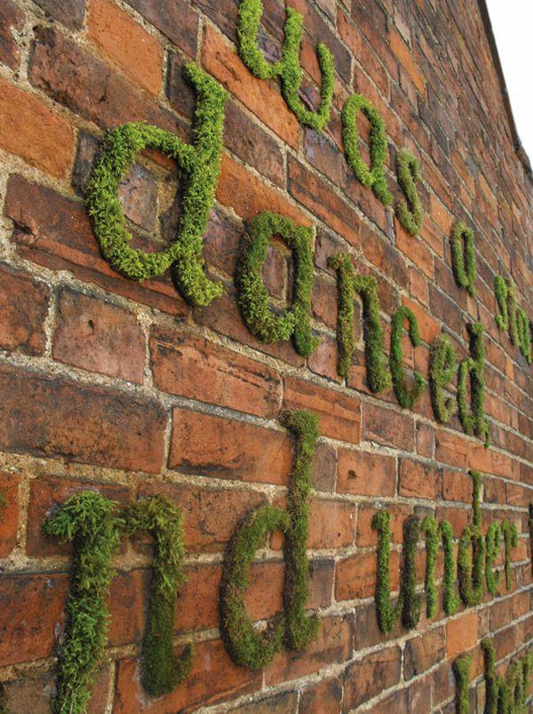 moss type on walls