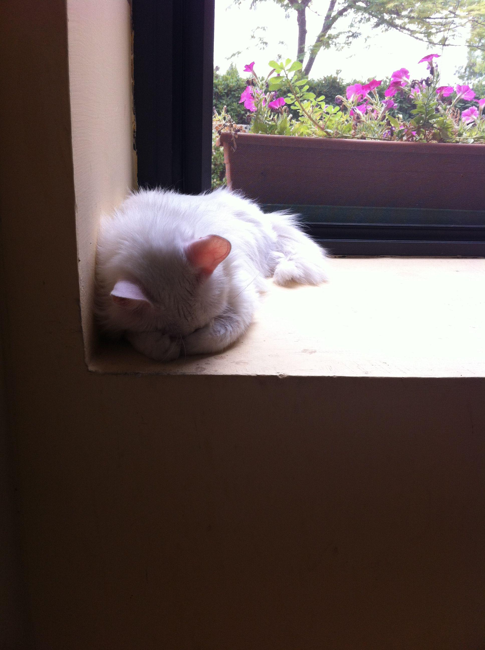 Gino the cat