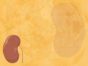 Kidney 02 Medicine Powerpoint Template Powerpoint