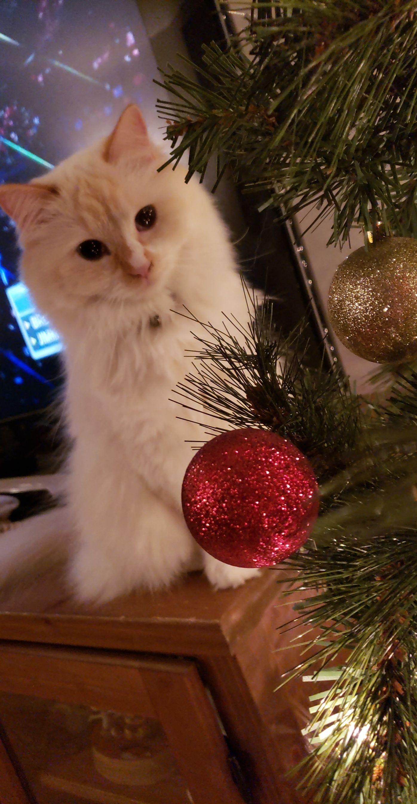 Buttercup's Second Christmas!https//ift.tt/2zqJHEU
