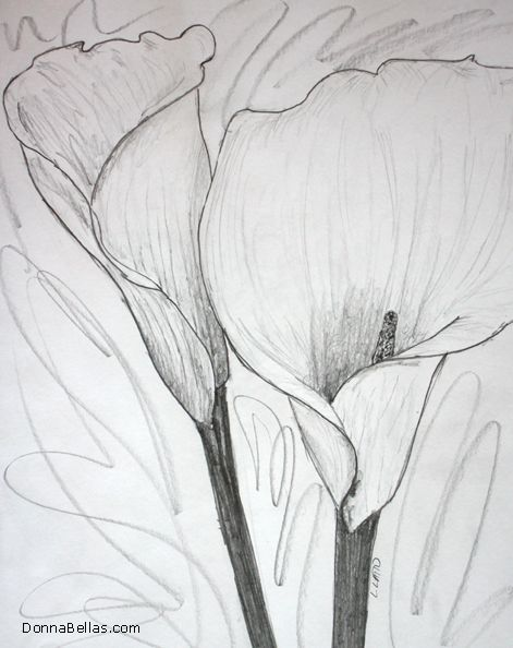 Two Calla Lilies Drawing Sketch Of Two Calla Lily Flowers Touching Art Rendered In Pencil Call Lilies Drawing Poppy Flower Drawing Watercolor Poppies
