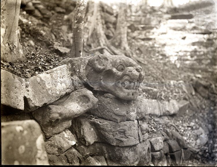 Jaguar's head on top of stairway; Eastern Court. Copán, Honduras. Photographed by: Dr Alfred Percival Maudslay in 1890-1891. -British Museum-