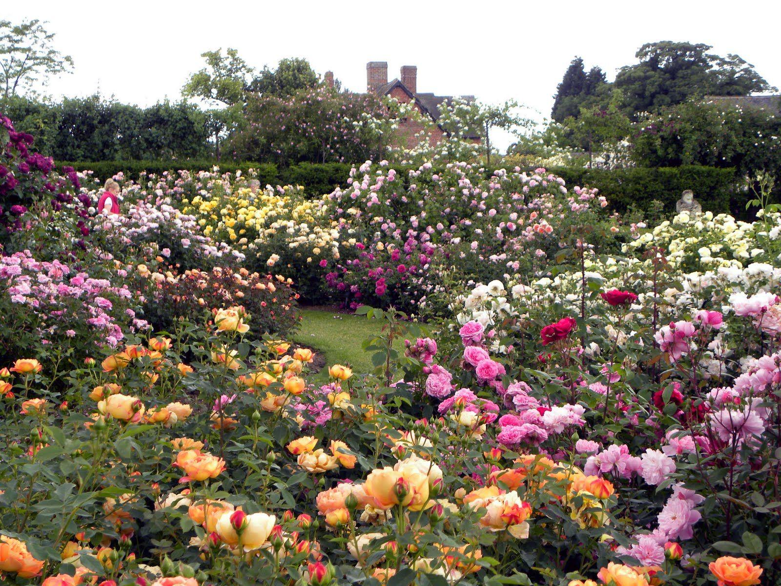 rose garden design róże pinterest