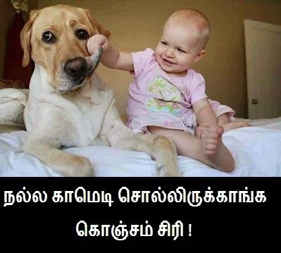 Baby Funny Comment Funny Comment Pictures Download Dogs And Kids Big Dog Care Funny Babies