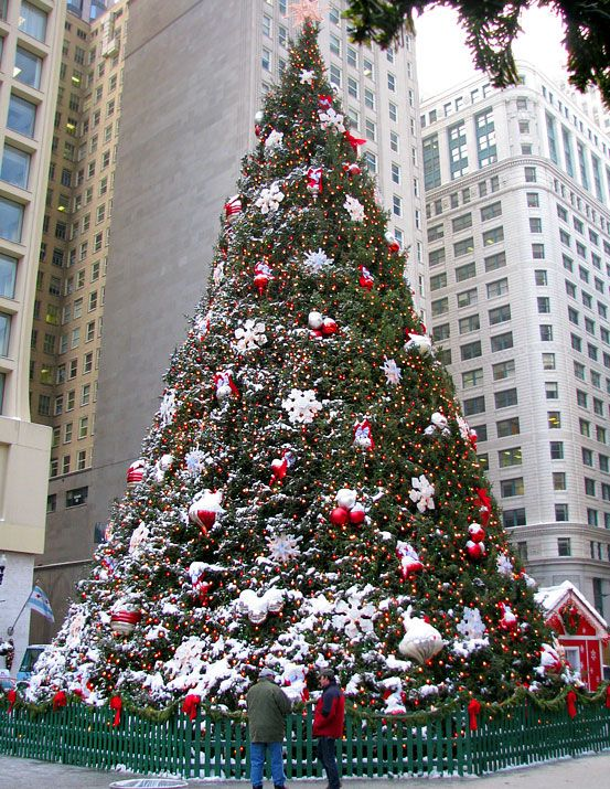 The History Of The Official Chicago Christmas Tree Chicago Christmas Large Christmas Tree Christmas Lights