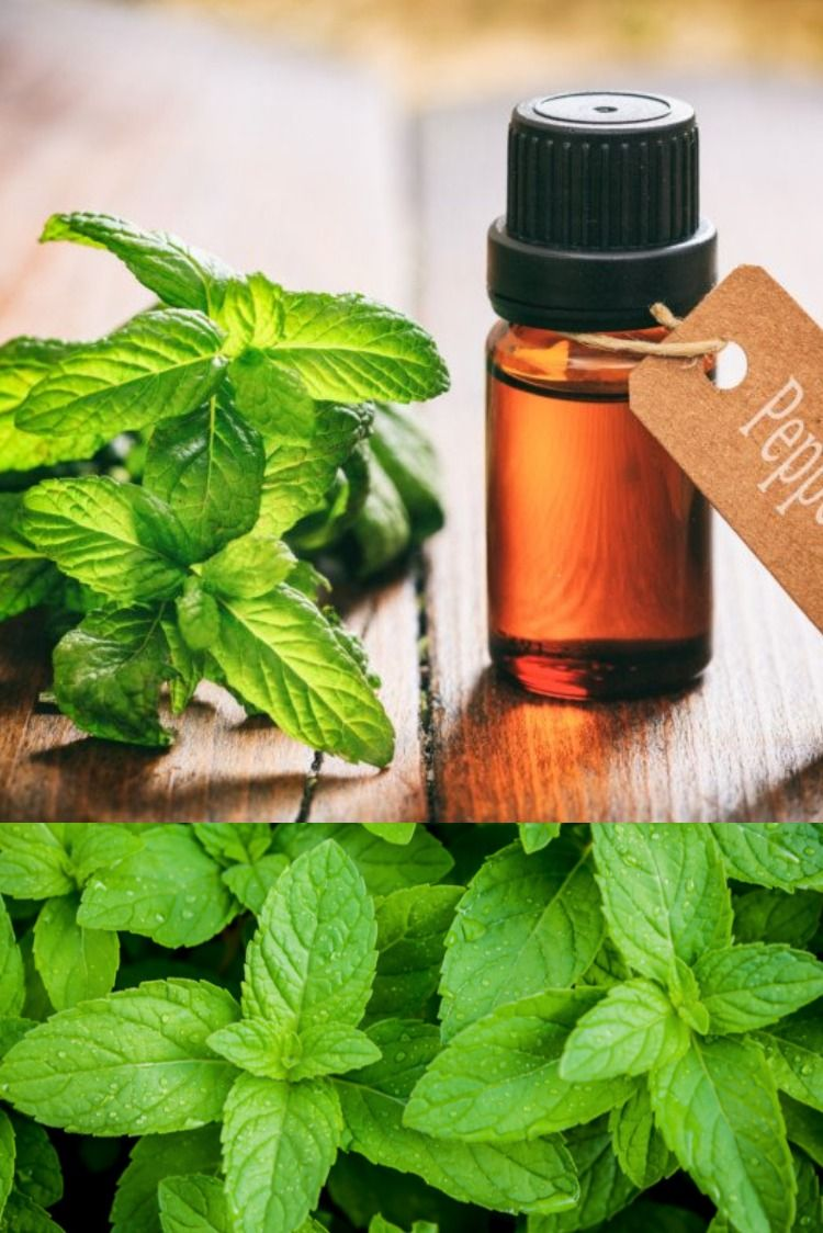How to make peppermint oil organic facts recipe