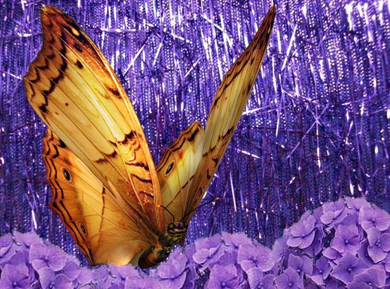 Fondos de pantalla de mariposas en movimiento gratis - Descargar fondo de pantalla en movimiento gratis ...