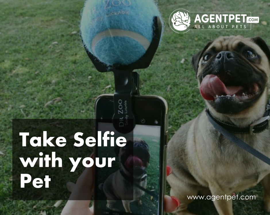 Take A Selfie With Your Pet Post It In Comment Section And Get A Chance To Win A Pkr 1000 Discount Voucher Agen Pets Online Pet Relocation Pets For Sale