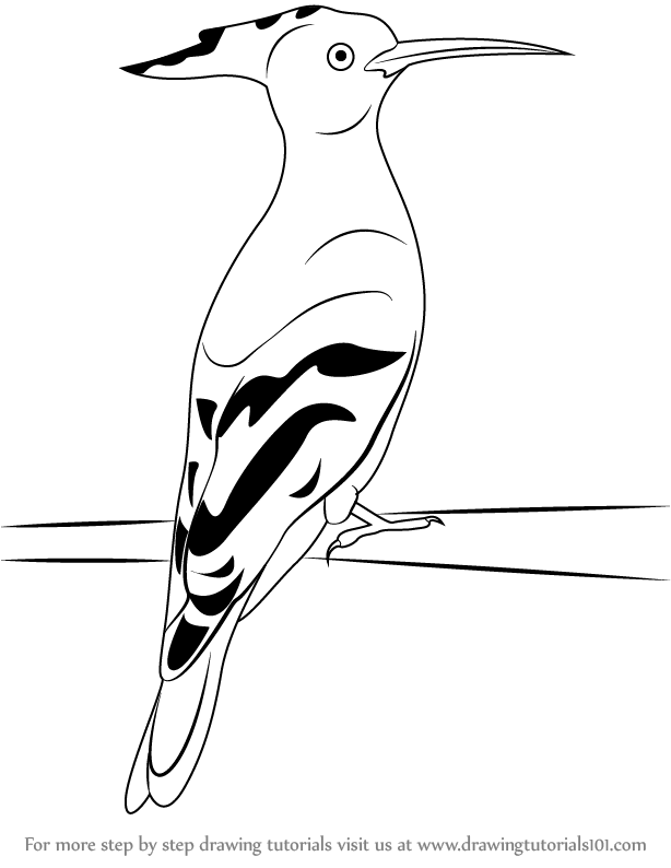 Learn How to Draw a Hoopoe Birds