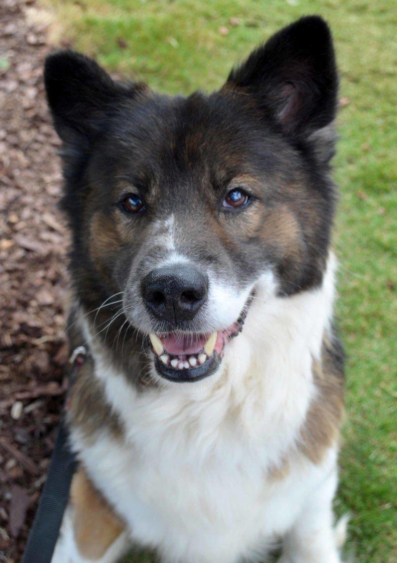 Adopt Keno On Unique Dog Breeds Collie Mix Rare Dog Breeds