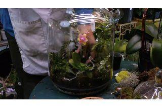 Flowers For Closed Terrariums Terr Orchid Terrarium Planting