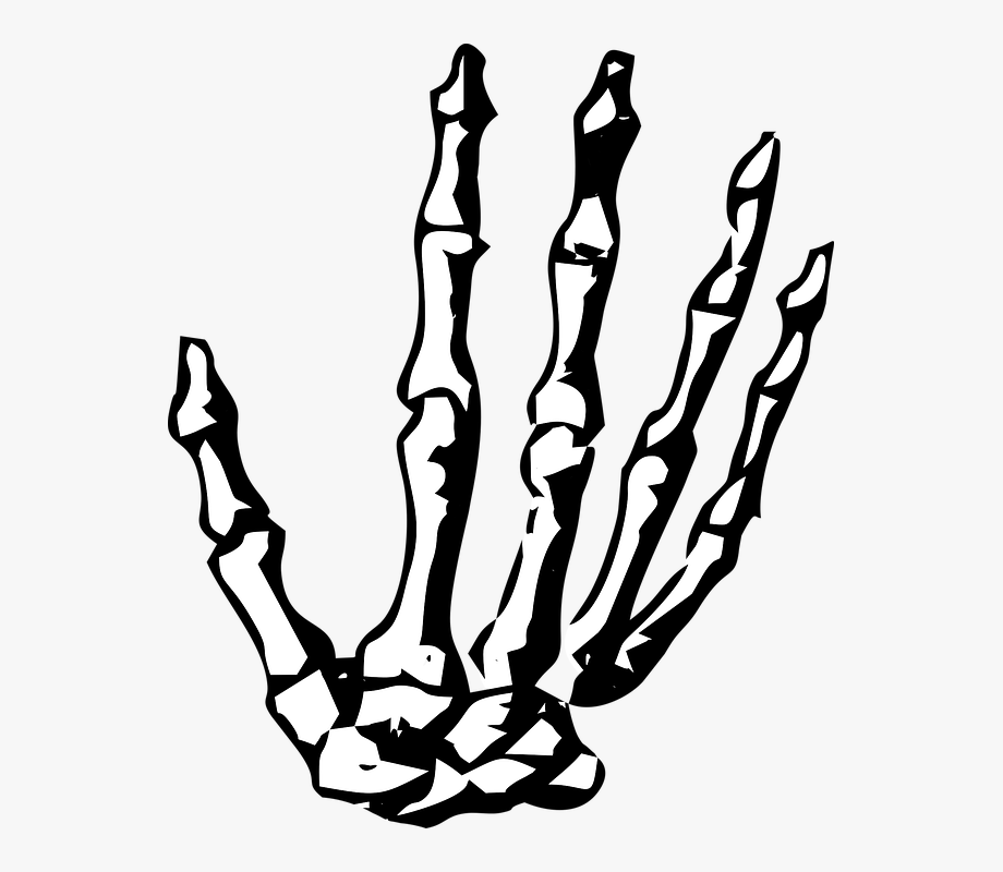 Halloween Skeleton Clipart Skeleton Hand No Background Free Unlimited Download On Clipartwiki To Search And Exp Halloween Skeletons Clip Art Skeleton Hands