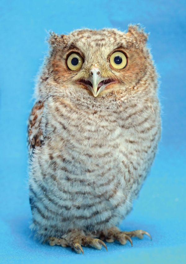 Traer Scott's Adorable Photos of Wild Baby Animals   American Photo