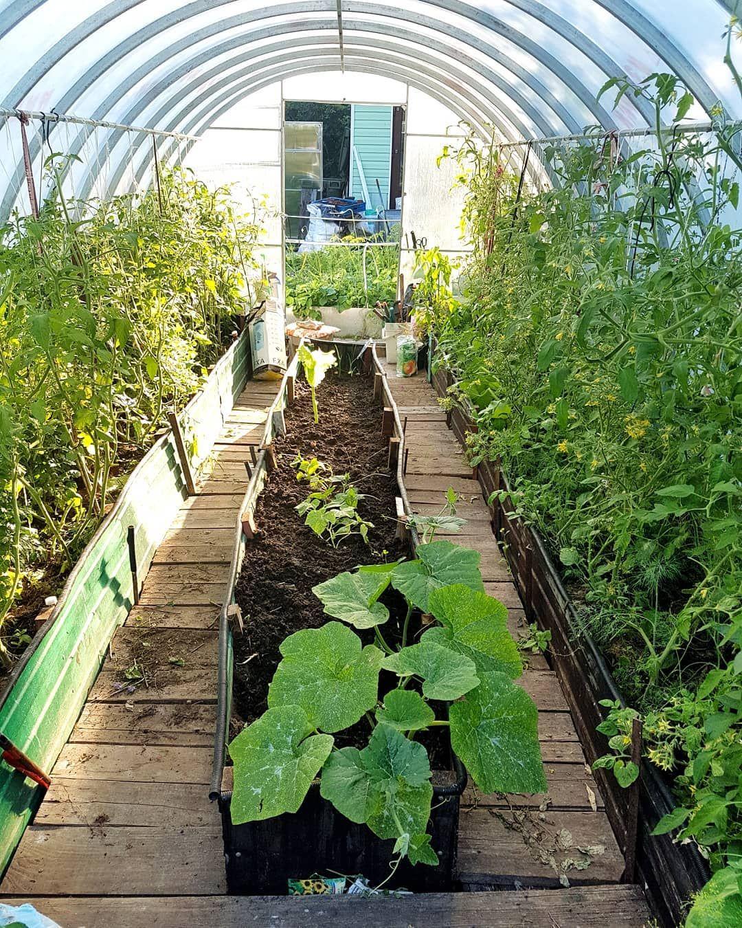 Le potager couvert! . Dans le jardin de Tante Lucie, il y a un potager et 2 grandes  serres. En voici l'une d'entre elles, des rangées de tomates et au milieu d'autres variétés de légumes. . Tout est naturel, bon et bio. . . .