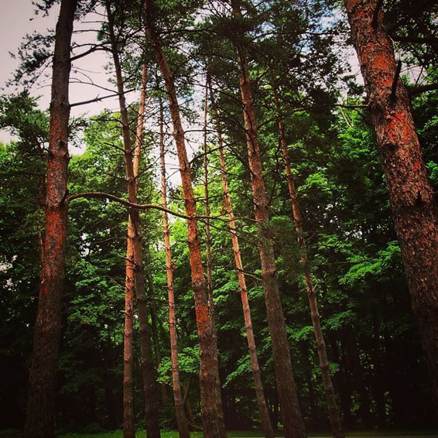 Into the woodsagain #tree #garden #woods #forest #nature #naturelover #plant #ohio #forest