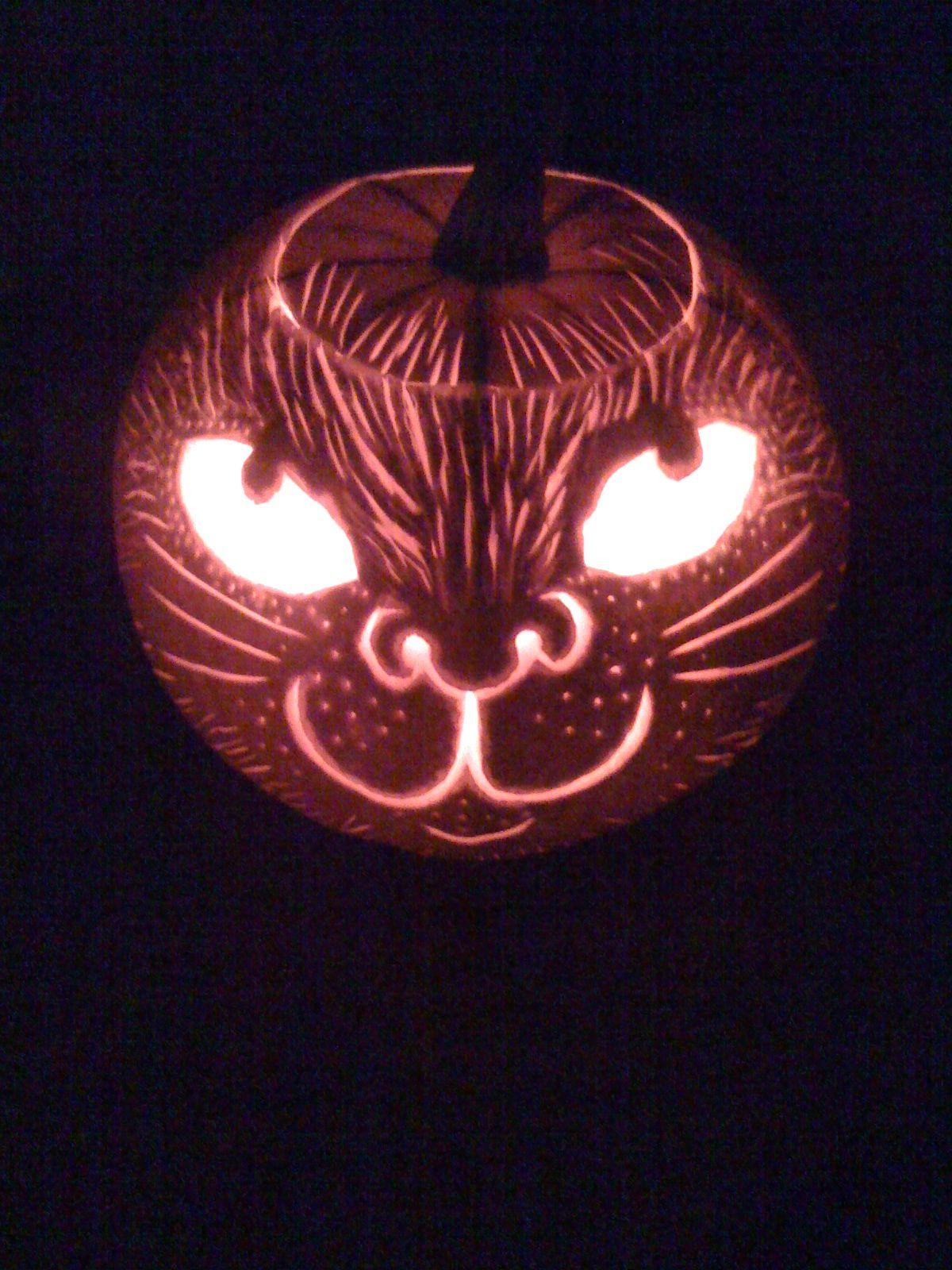 My cat pumpkin Cat pumpkin, Pumpkin carving, Halloween