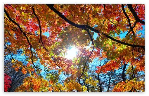 Autumn Sunshine Wallpaper Sunshine Wallpaper Fall Computer Backgrounds Fall Desktop Backgrounds
