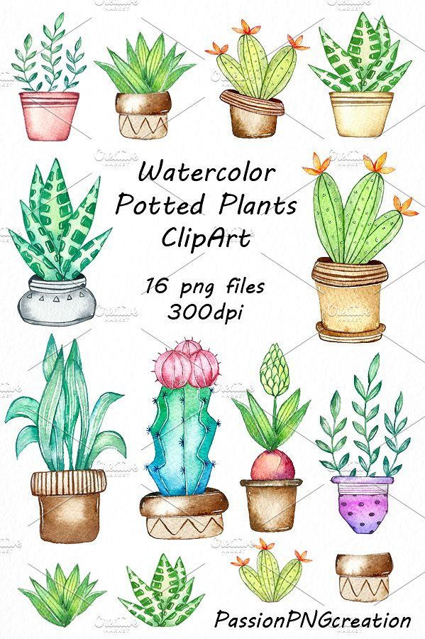 Watercolor Potted Plants Clipart Plant Drawing Succulents Drawing Watercolor Plants