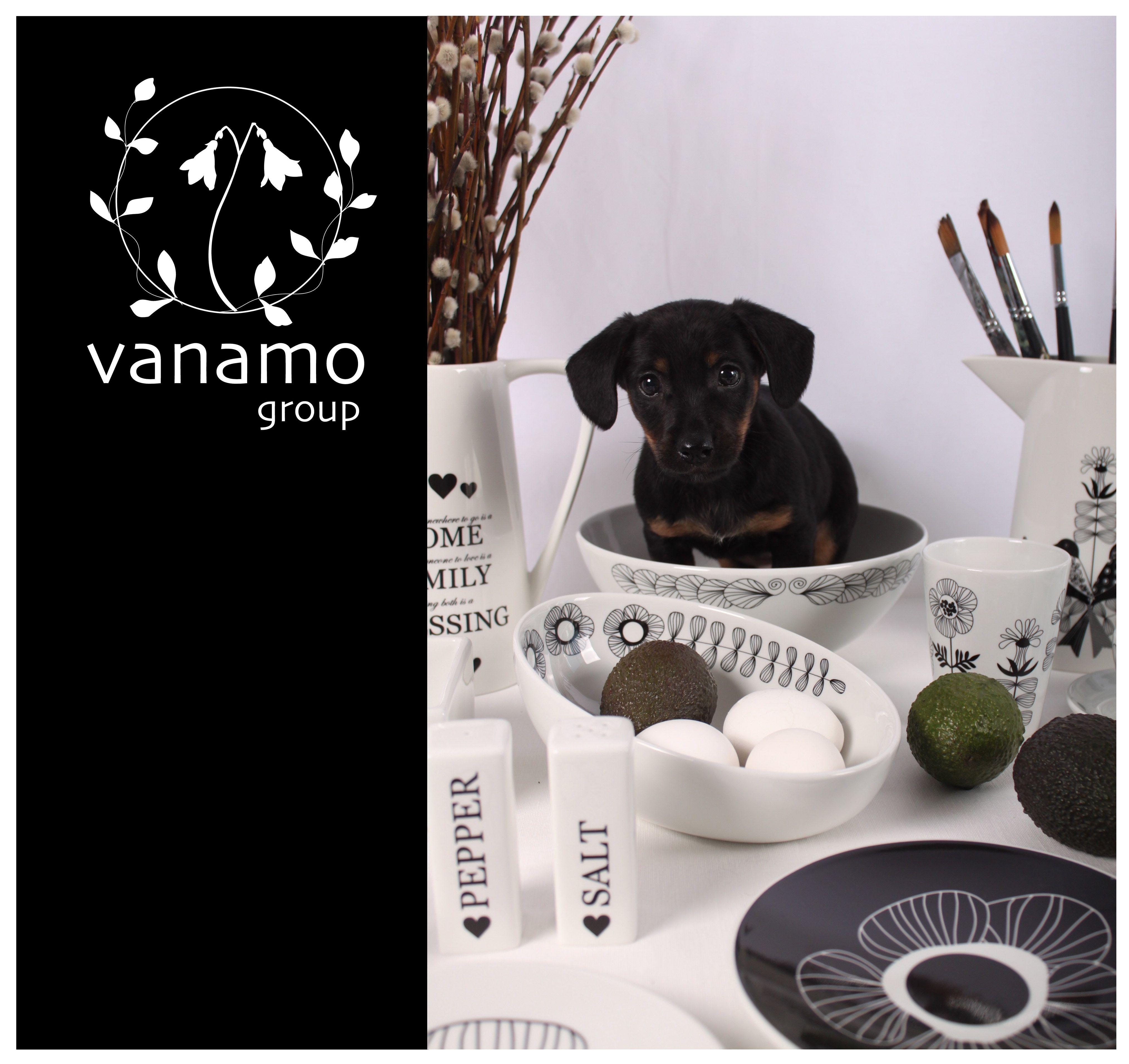 Ilahduta arkeasi ja kaunista juhlaasi Vanamo Group Oy:n laadukkailla vitroposliiniastiastoilla. #habitare2015 #design #sisustus #messut #helsinki #messukeskus