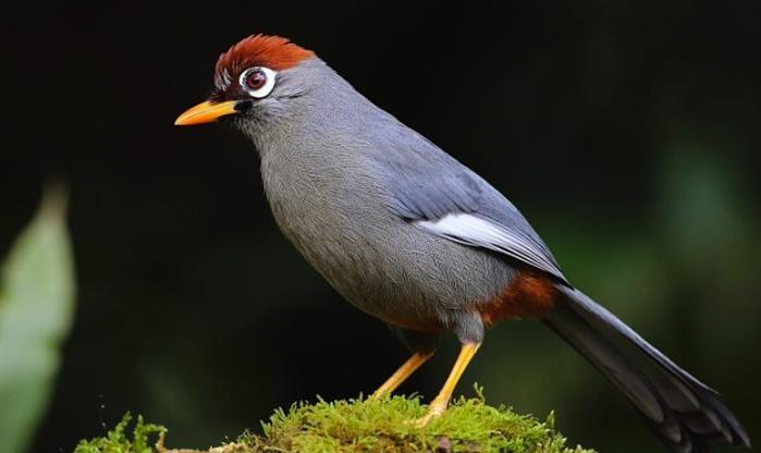 Burung Poksay Di 2020 Hewan Burung Kandang Burung