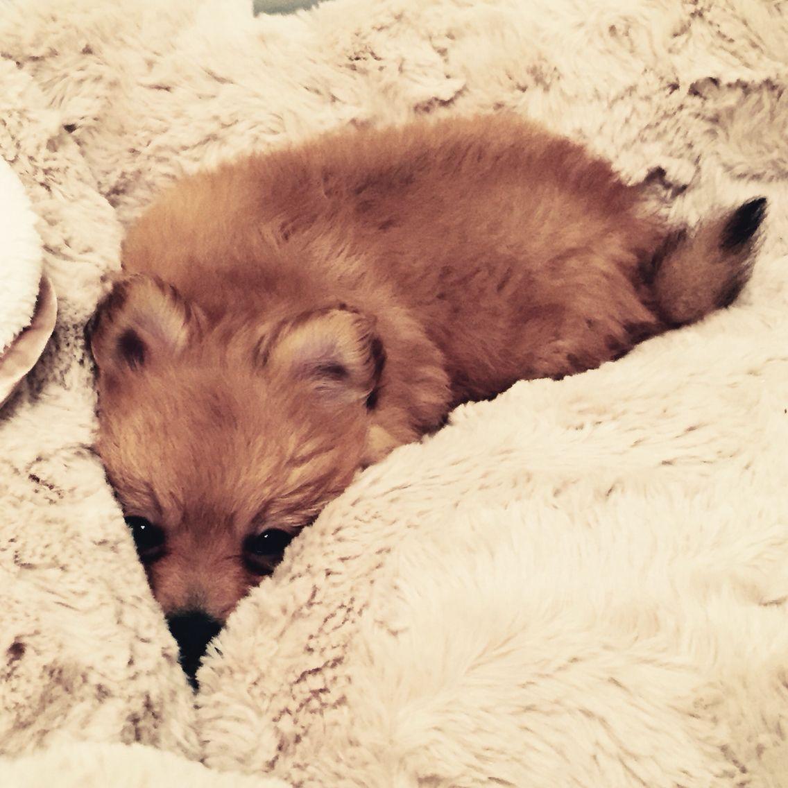 Sleepy Hugo #hugsfromhugo