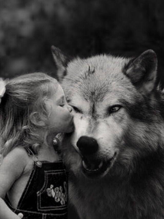 ADA CONTI  Foto  Fotos lobos Amor de lobo Imagenes de lobos