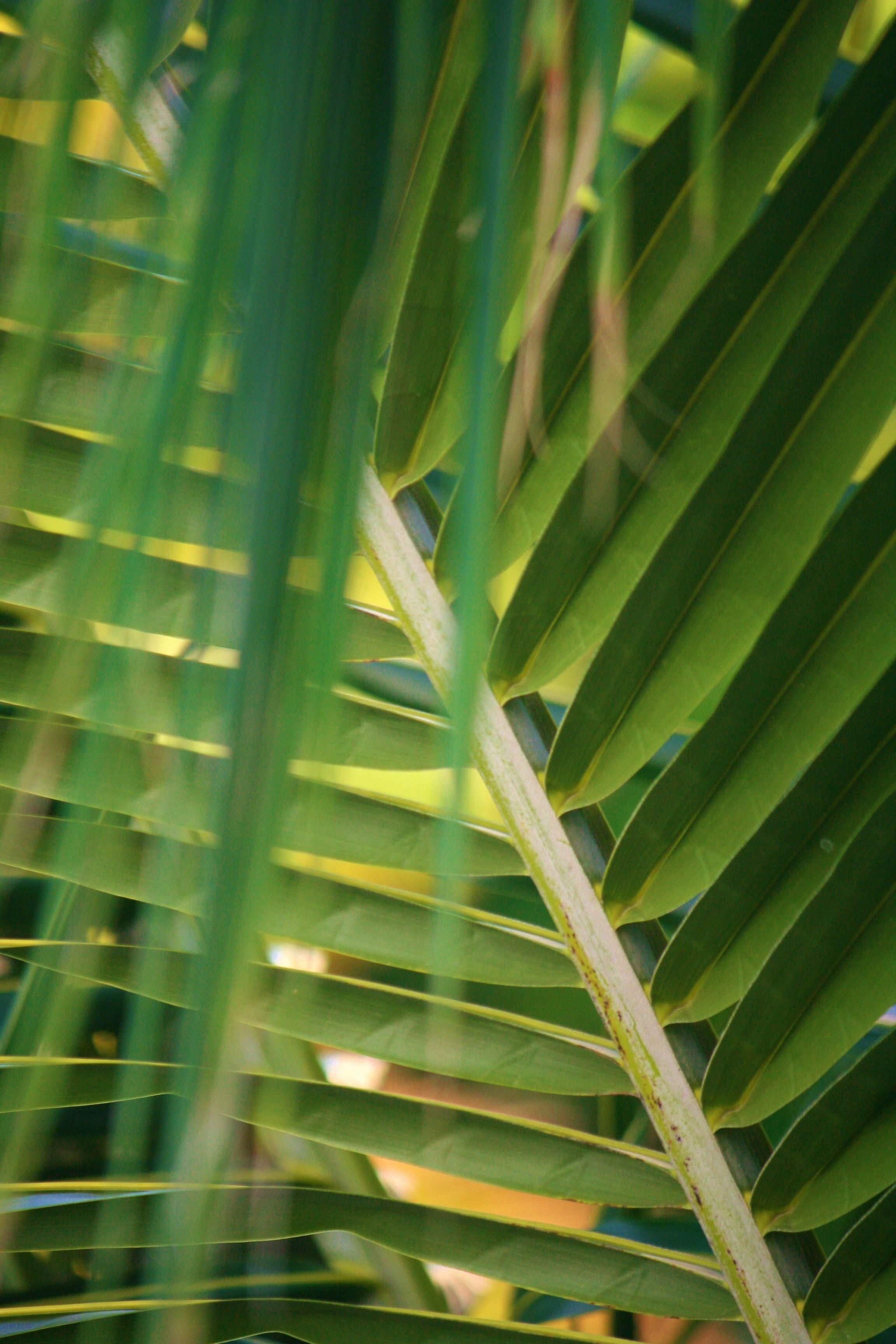 Palm Frond Akumal,Mexico by Bhadra Kali Plant leaves