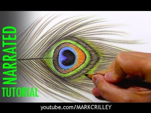 Drawing a peacock feather step by step tutorial prismacolor pencils youtube